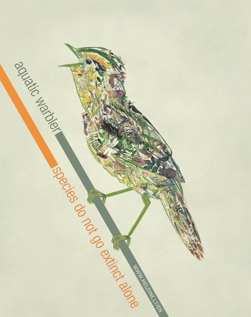 Poster of Aquatic warbler