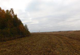 обкашивание минеральных островов, разграничение открытого болота и леса.