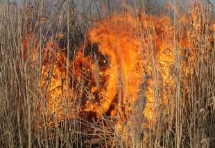Buveinių atkūrimas - kontroliuojamas deginimas- Zvanets pelkėje, Baltarusijoje
