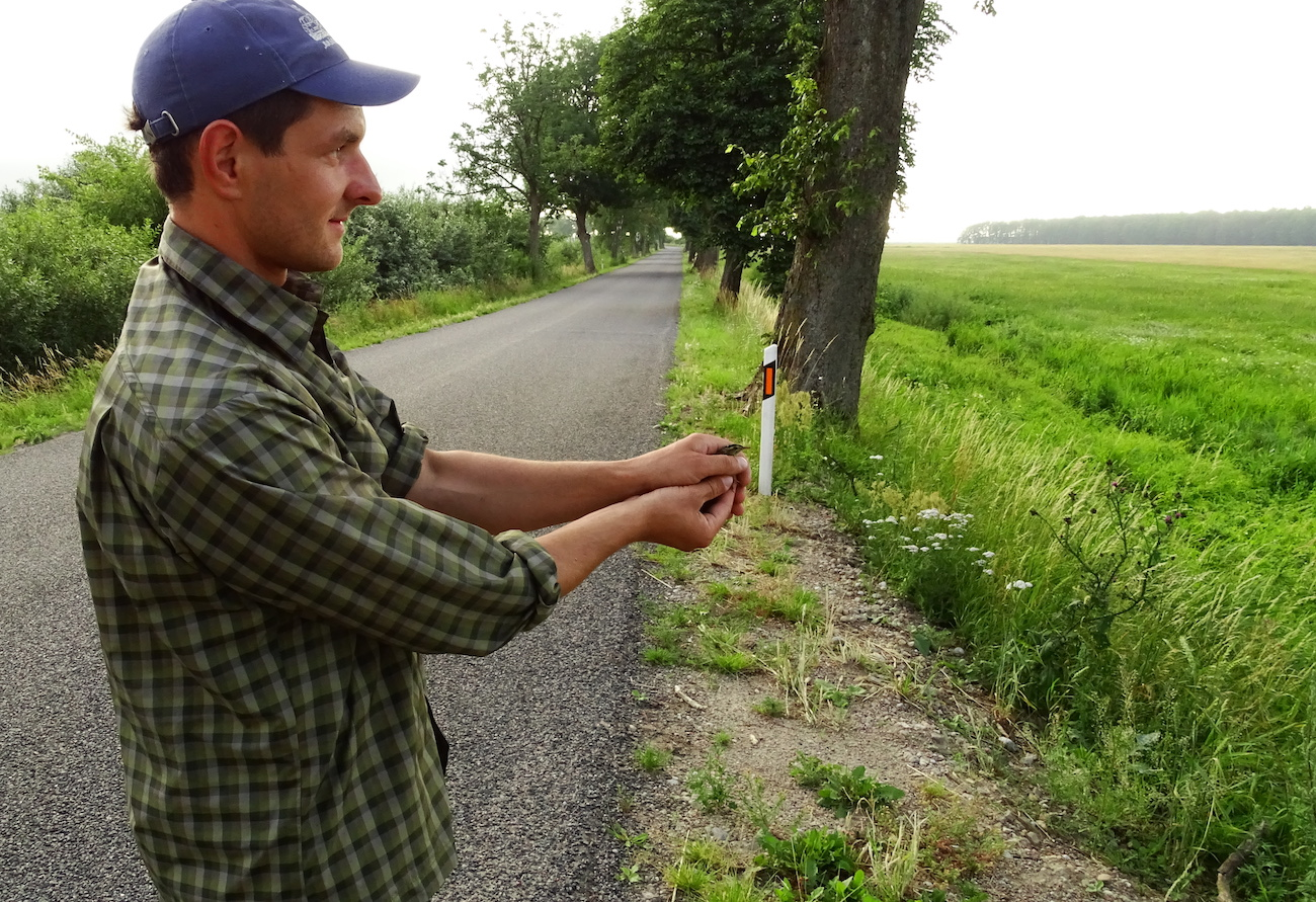 Ornithologist Vytautas Eigirdas is carrying out geolocator research in Nemunas delta