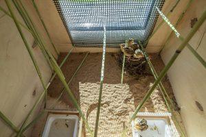 Транслокация вертлявой камышевки
