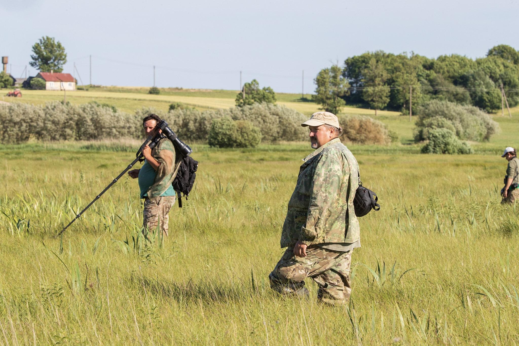 """Baltarusių ornitologai atlieka meldinių nendrinukių patelių paiešką """"šukuodami"""" pelkes."""