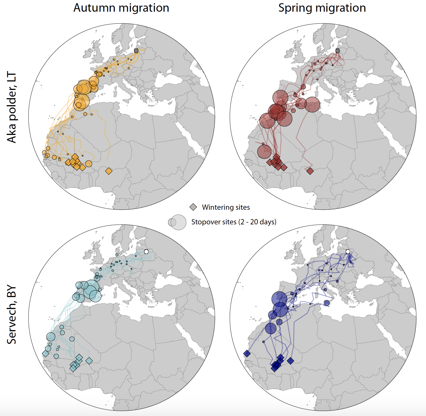 Results of geolocator research - autumn and spring migration of Aquatic warblers from Lithuania and Belarus