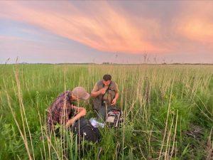 Counting of Aquatic warblers in Žuvintas Biosphere Reserve